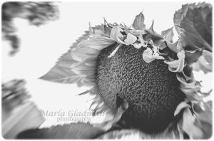 flower-2109 copyweb