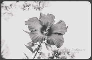 flower-2114 copyweb