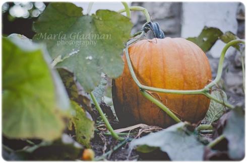 autumnweb